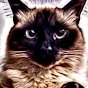 Wendy Parker - @crazy4cats777 - Youtube