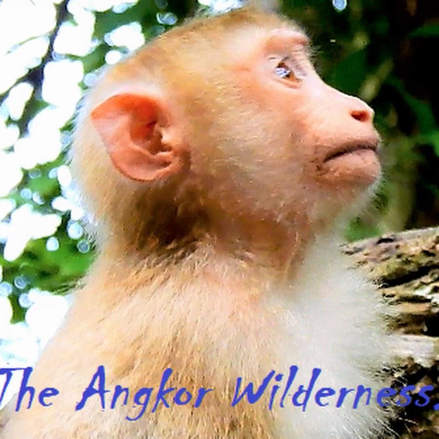 Monkey Angkor Region