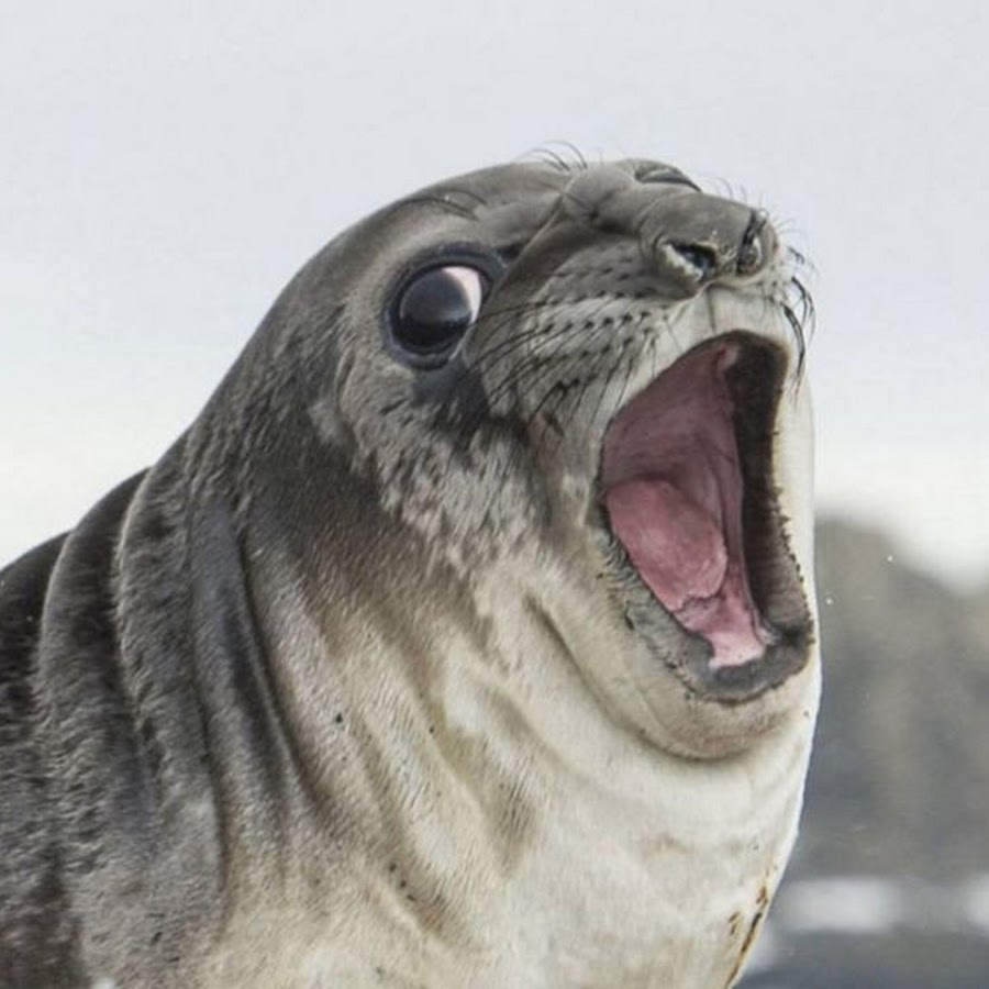 The Seal Rare