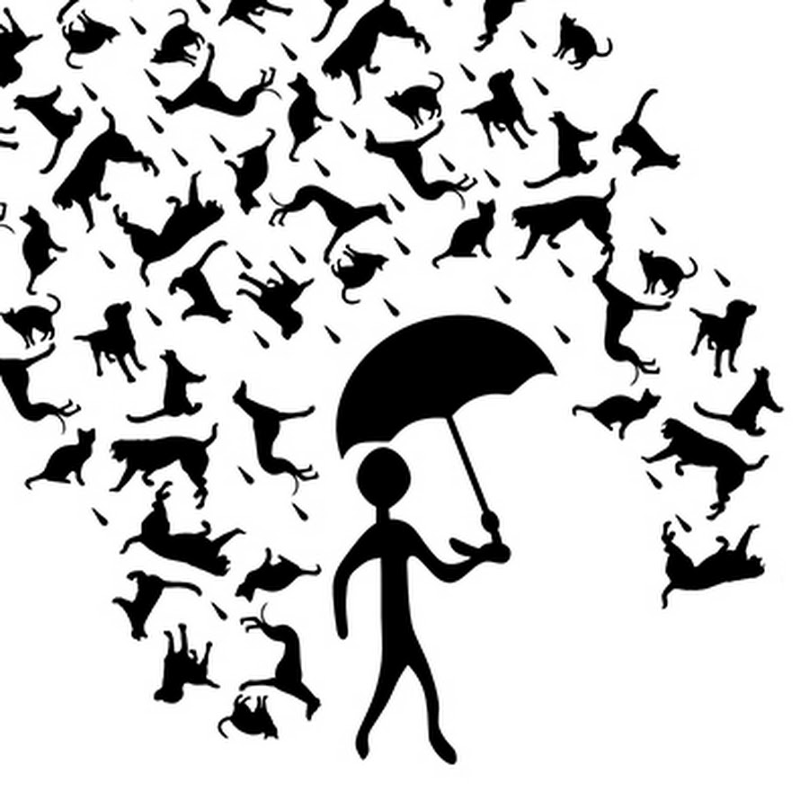 Its Raining Cats & Dogs