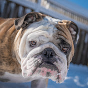 Reuben the Bulldog net worth