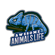 Awesome Animals Life