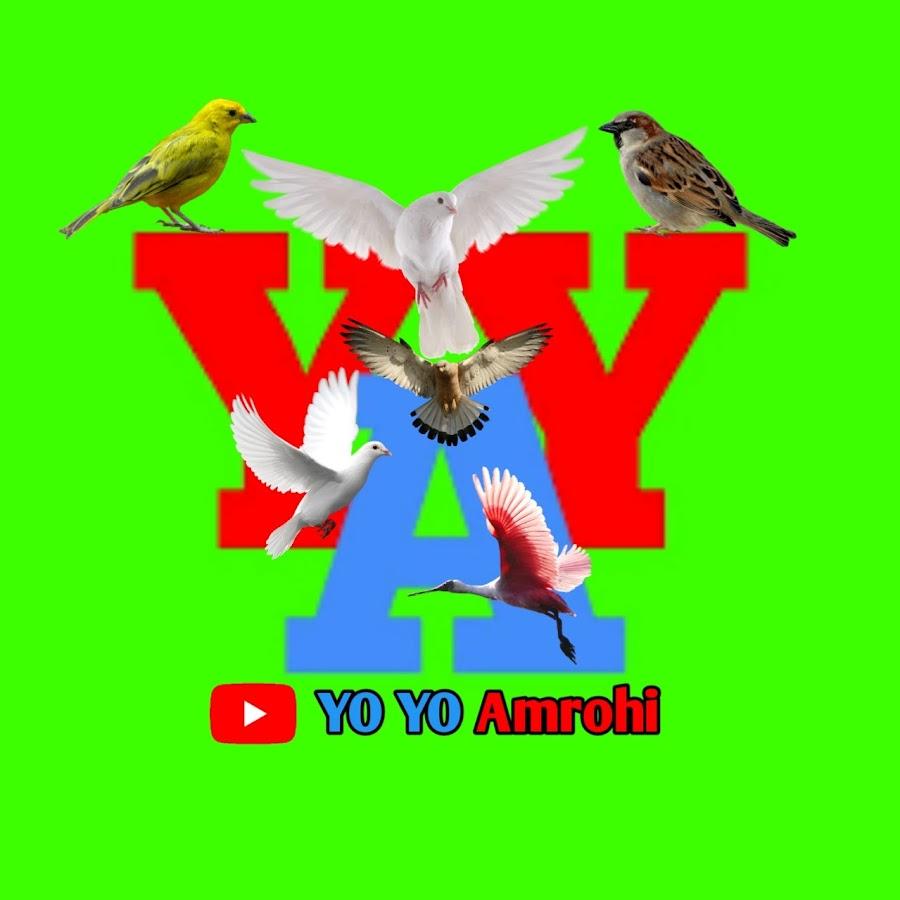 YO YO Amrohi