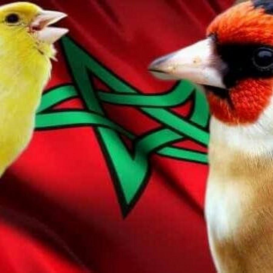 التجمع العام للطيور