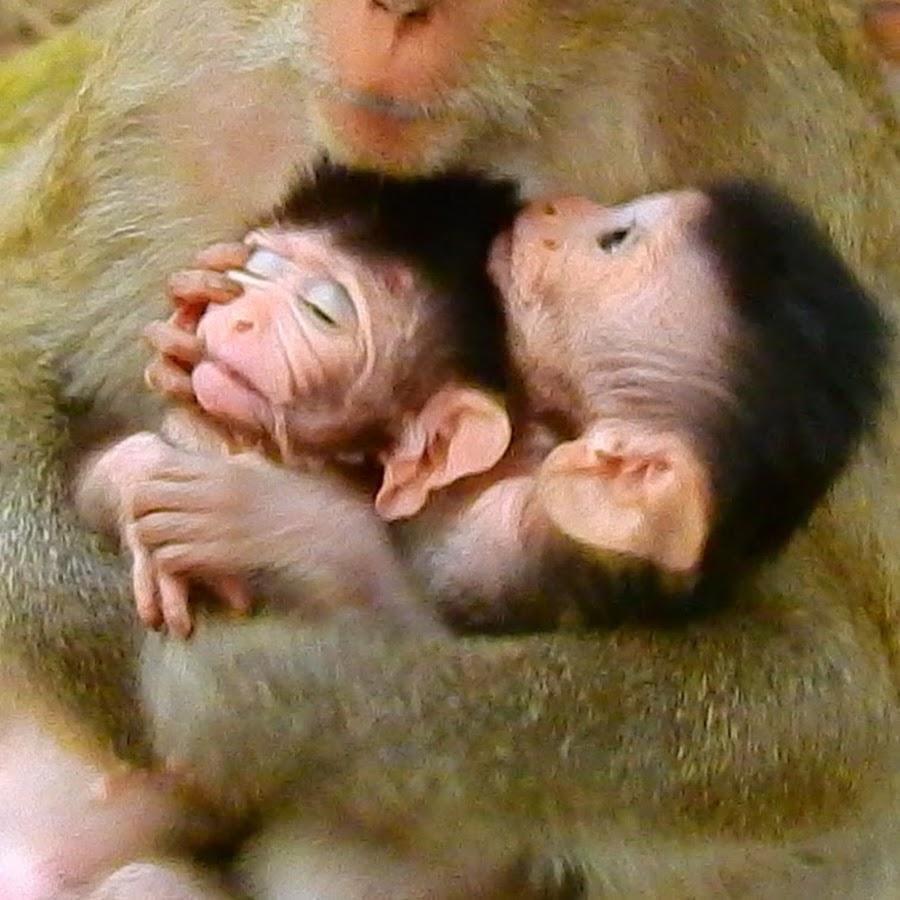 Monkey Share