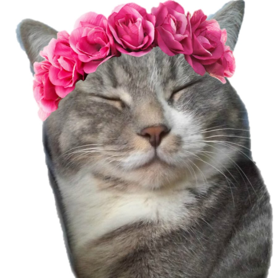 Хозяйка кота Семен
