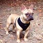 Finchley Dog Walking - Youtube