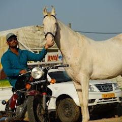 Rupal Stud farm 07
