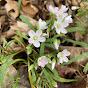 Walsh University Field Botany - Youtube