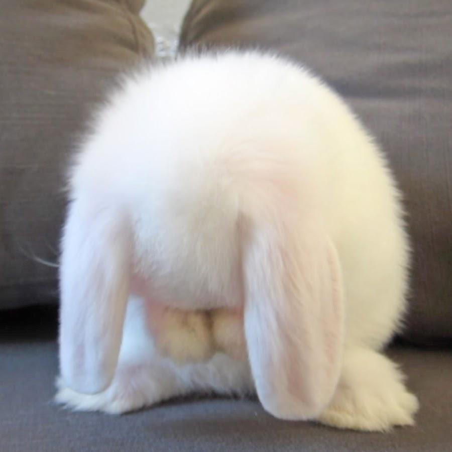 My BB Bunny