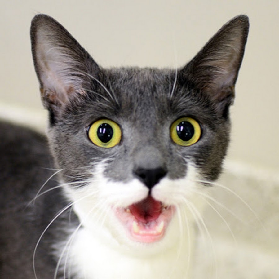Wonderful Funny Cats