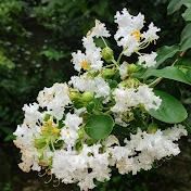 The ArtBucks net worth