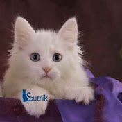 Turkish Angora Cats Club