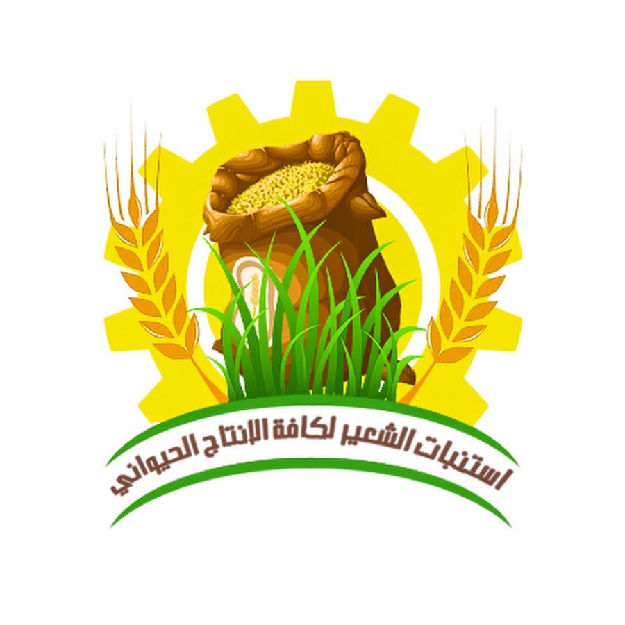 الشركة المصرية MA