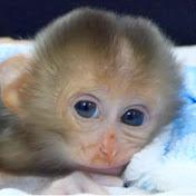 Monkey Dody net worth