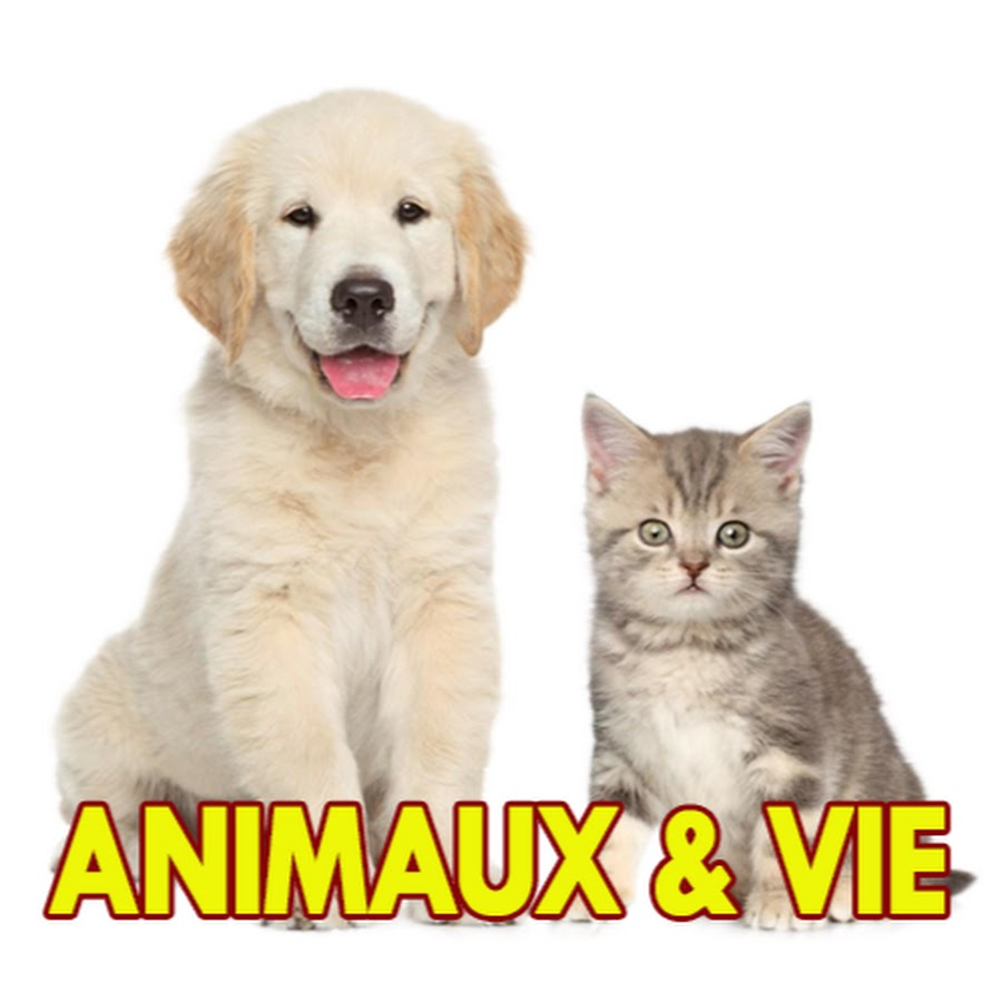 Animaux & Vie