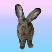 Jabba The Rabbit