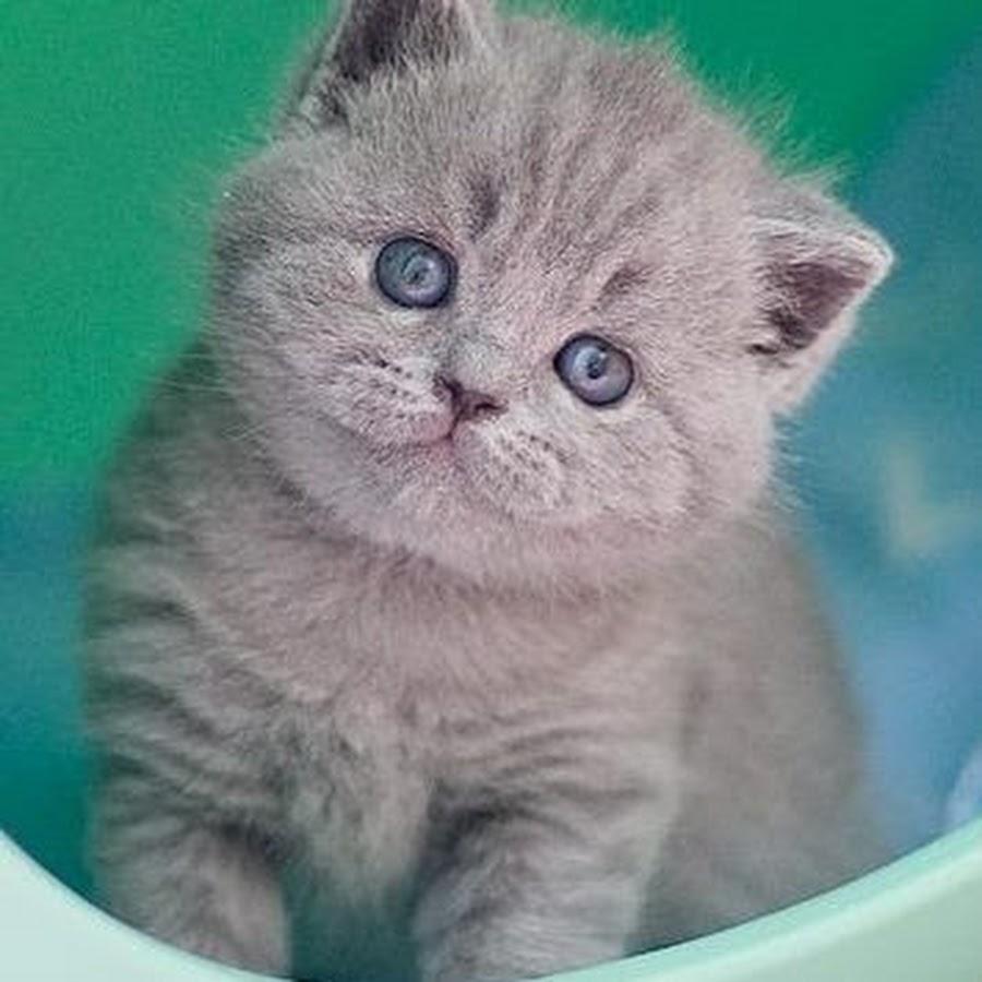 Cattery Smitten Kitten
