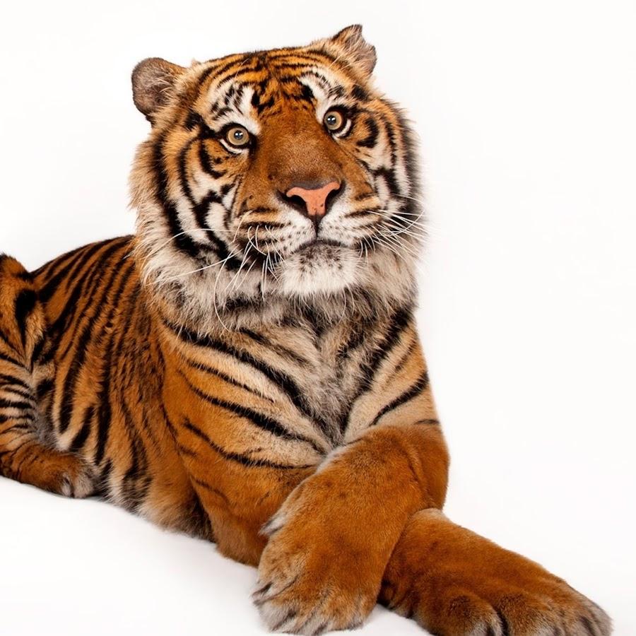 Bps Kota Tanjungbalai Youtube