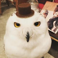 フクロウ大好き 【Cute owls 】