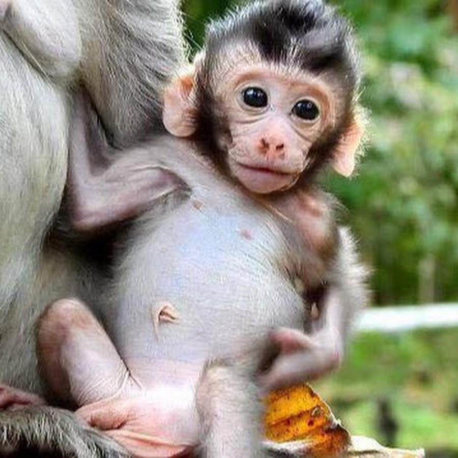 World Monkey