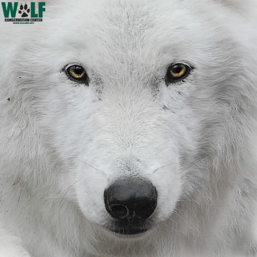nywolforg
