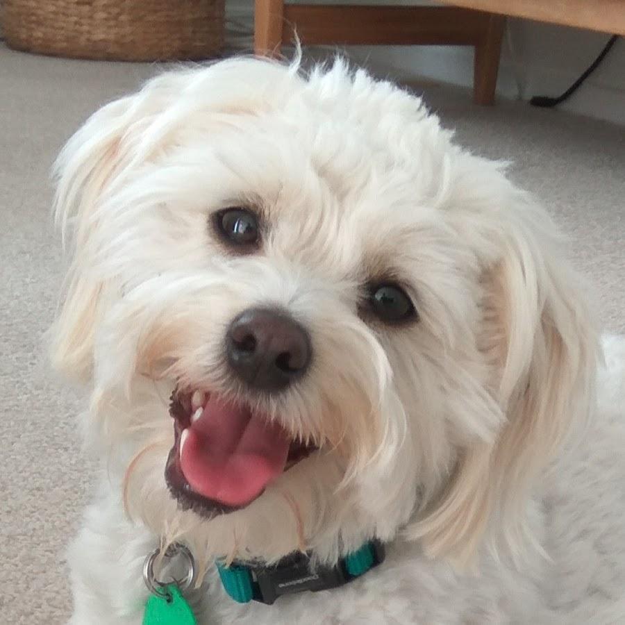Little Miss Ellie Dog