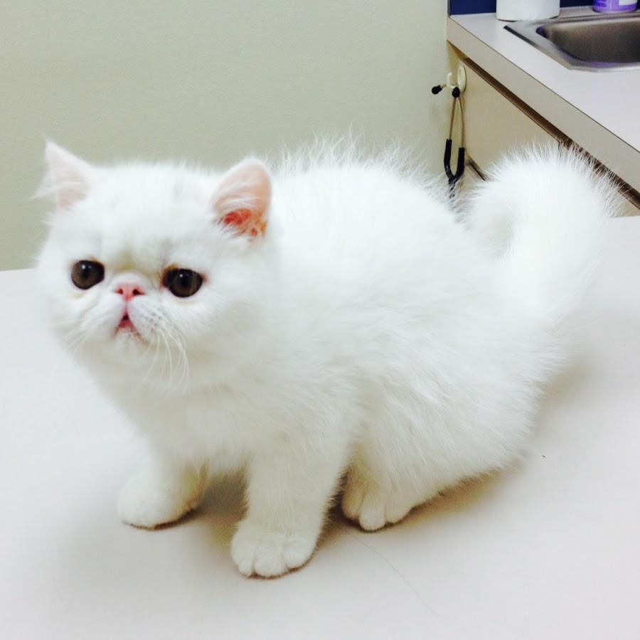 Meow Meow Cafe