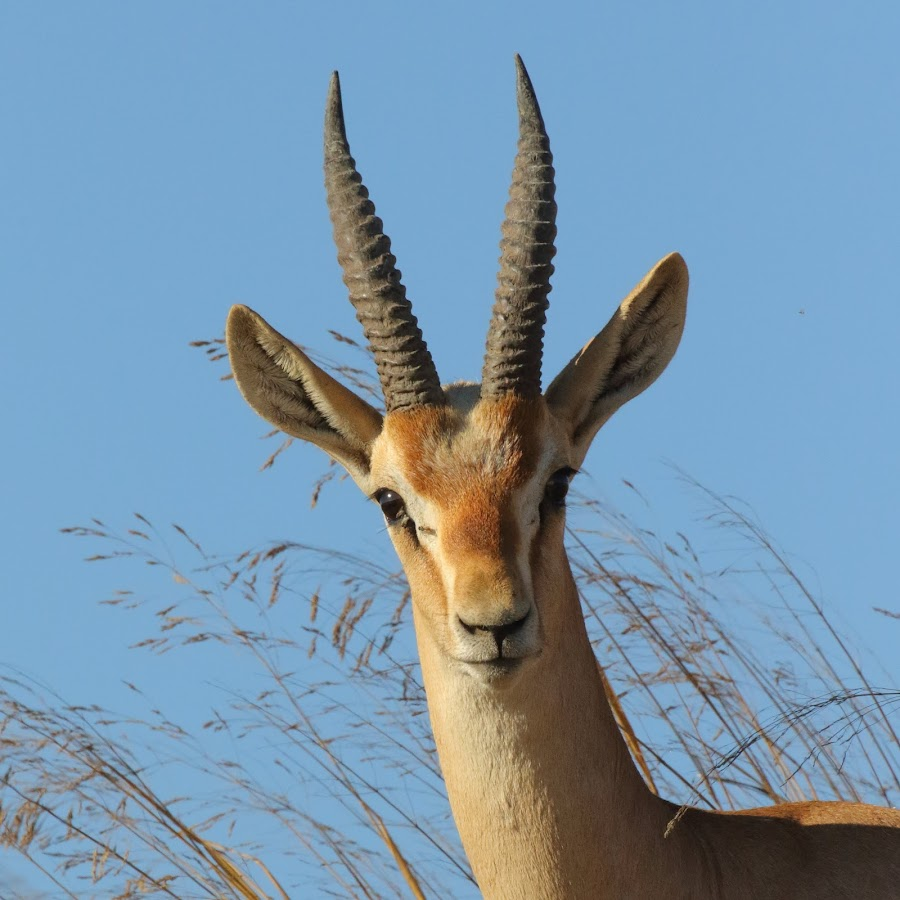 Israel Wildlife Channel