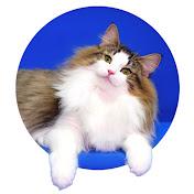 피니엔스FINIENCE CATS