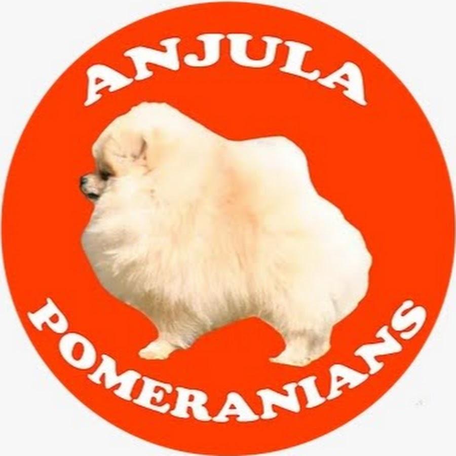 Anjula Pomeranians