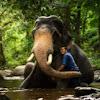 Thai Elephant camp