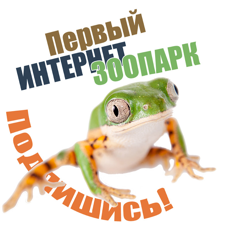 ZООCOM club статистика канала