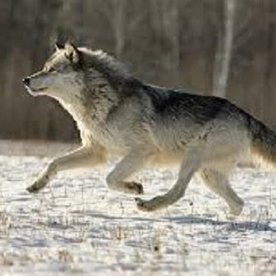 Hunting Wild hunt TV