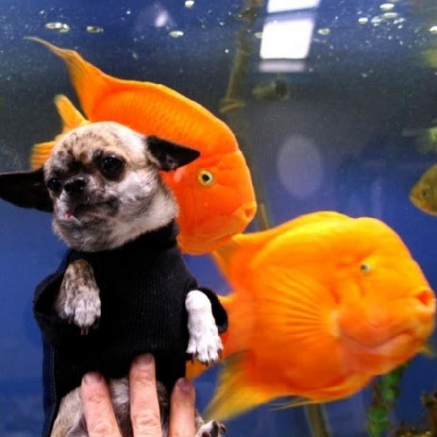 Mundi Aquarium Center