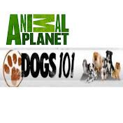 Dogs101Videos