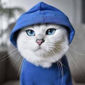 Pet Meow