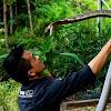 Diaz Borneo
