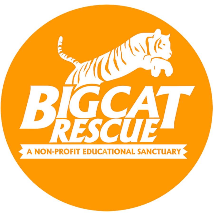 Big Cat Rescue - YouTube