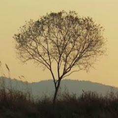 물가에선나무