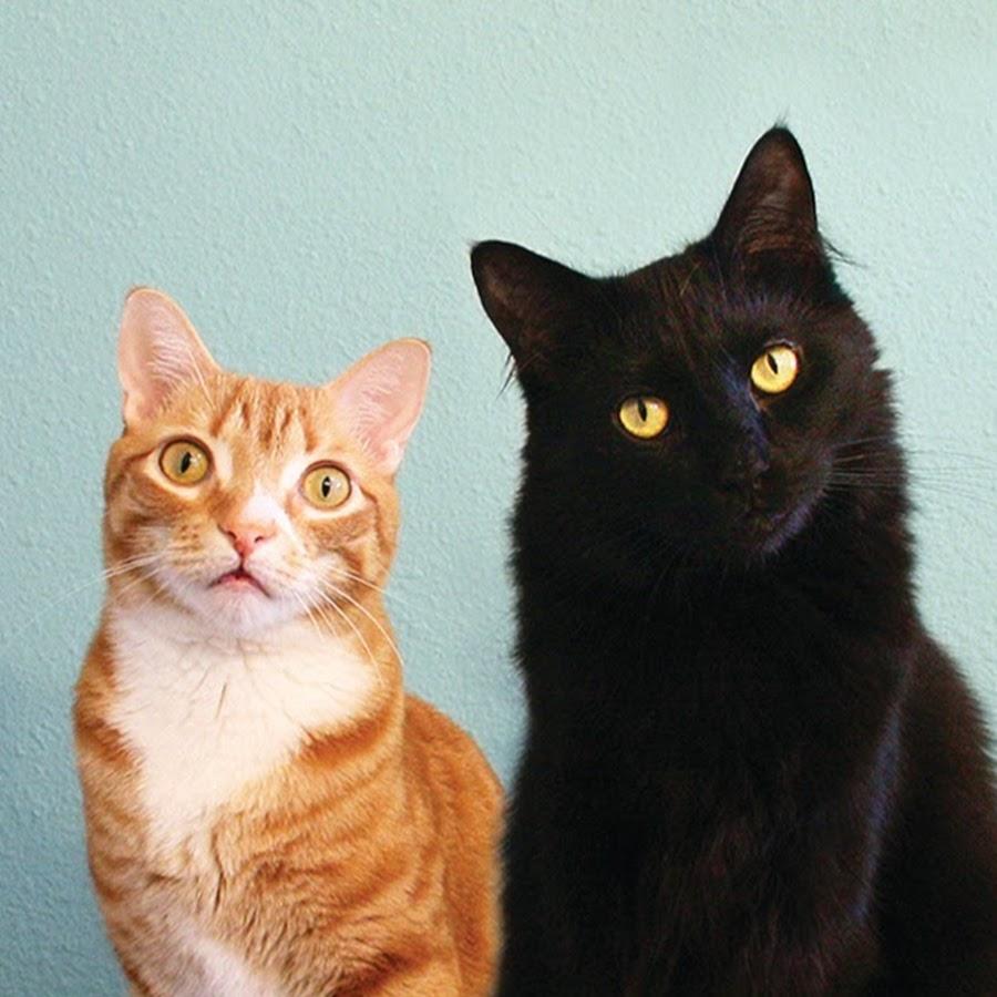 Cole and Marmalade