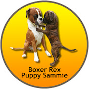 BoxerRex