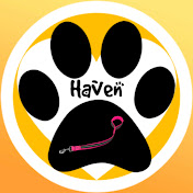 Dogs Haven