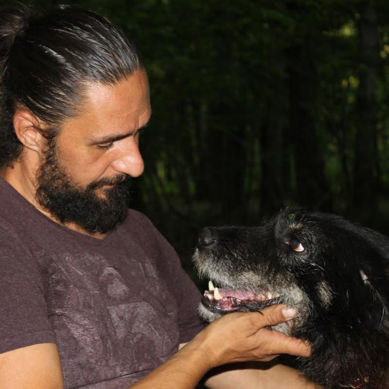The Pack Dog Sanctuary (the-pack-dog-sanctuary)