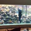 Eli Aquarium