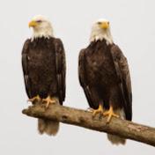 Southwest Florida Eagle Cam Avatar