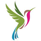 Hummingbird Spot net worth