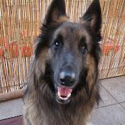 Rancho The Dog