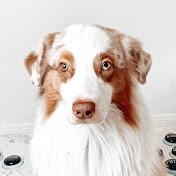 Flambo The Dog