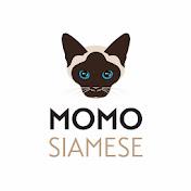 Momo Siamese